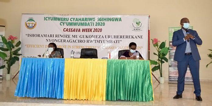 new cassava varieties in rwanda